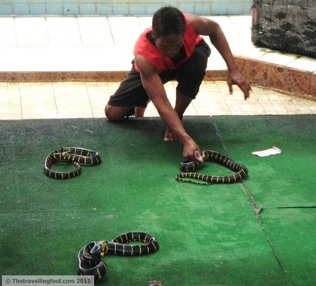 Thai-Snake-Handlers2-1024x927
