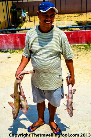 Fisherman with sharks